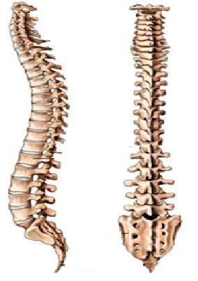Durere de spate  / durere lombara