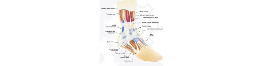 leziuni la gleznă și la picior)