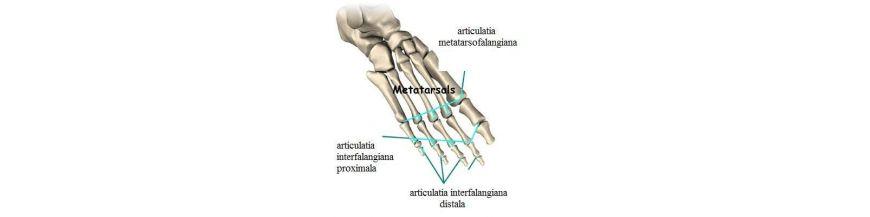 descriere detaliată a tratamentului cu metrozarea metatarsică